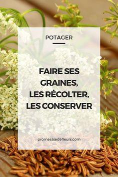 Make your seeds, harvest them and keep them well - Stafani Hynde Potager Bio, Potager Garden, Balcony Garden, Garden Pond, Supermarket, Permaculture Design, Tips & Tricks, Green Garden, Plantation