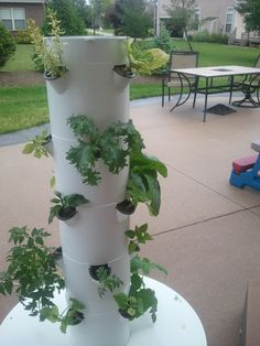 Grow food in your backyard with the Tower Garden!!