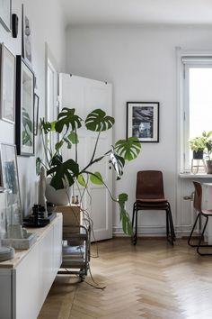 Green living space - via Coco Lapine Design blog
