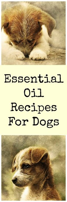 Easy essential oil recipes for dogs.