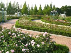 beautiful flower garden, Lake Park, Ilsan City, Korea