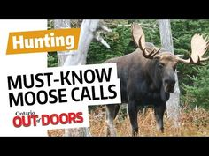 5 Must Know Moose Calls - Ontario OUT OF DOORS