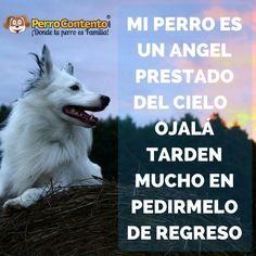 Mi perro es un angel prestado del cielo, ojalá tarden mucho tiempo en pedírmelo de regreso