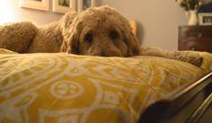 puppy Mans Best Friend, Best Friends, Puppies, Dogs, Animals, Beat Friends, Animales, Puppys, Animaux