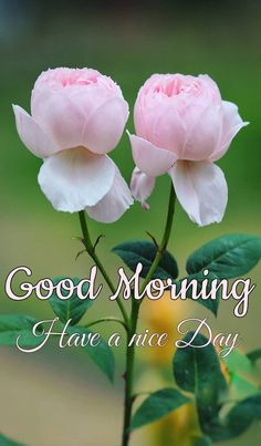 Good Morning Images with flowers for lovers Good Morning Gif Disney, Good Morning Images Flowers, Good Morning Beautiful Images, Latest Good Morning Images, Good Morning Roses, Good Morning Cards, Good Night Gif, Good Morning Picture, Good Morning Greetings