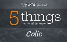 [VIDEO] 5 Things You Need to Know: Colic - TheHorse.com | Equine surgeon Dr. Sarah le Jeune shares what every horse owner needs to know about colic.