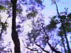 Tumbleweed 'Sundial'