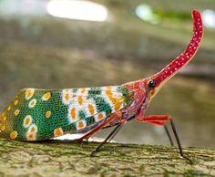 A família Fulgoridae é um grande grupo de insetos hemípteros, especialmente…