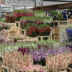 Masses of fresh-cut Stock and Delphinium at the brand new, New Covent Garden Market, April New Covent Garden Market, New Market, Delphinium, Flower Market, New Chapter, Love Flowers, Old Things, Patio, Marketing