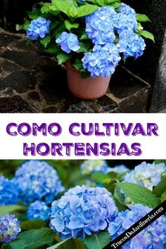 Many people use horticulture as a way to relieve stress and have some fun. Knowing the right soil to get, which gardening equipment to buy and when to plant Garden Pests, Garden Planters, Herb Garden, Indoor Garden, Garden Tools, Garden Mulch, Easy Garden, Garden Projects, Potato Gardening