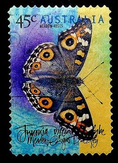 Butterfly -Meadow Argus -Australia -18054 Framed Postage Stamp Art
