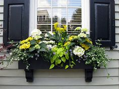 Black window box with black shutters, Tradd Street, Charleston, SC - Pflanzideen Container Plants, Container Gardening, Succulent Containers, Container Flowers, Succulent Planters, Flower Planters, Br House, House Front, Front Porch