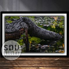 Downloadable image, digital photo, printable wall art, forest, meadow, river, nature, water, reflection, spring, leaf, Vienna, Austria Nature Water, Photo Tree, Vienna Austria, Landscape Photos, Nature Photos, Printable Wall Art, Reflection, Nature Photography, Digital Art