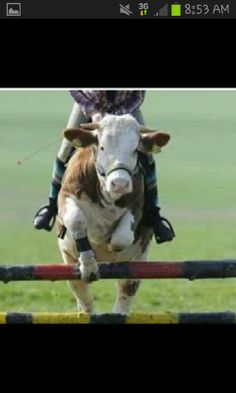 Train a cow how to ride♡♡♡