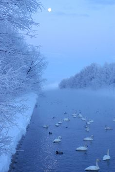 Beautiful winter World, Hokkaido, Japan. Swans at winter Winter Szenen, Winter Love, Winter Magic, Winter Is Coming, Travel Pictures, Cool Pictures, Vive Le Vent, Snow Scenes, Winter Beauty