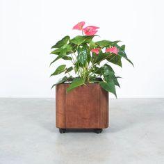 Botanical Decor, Square Planters, Furniture Making, Planter Pots, Living Room, Storage, Gallery, Floral, Plants