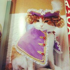 New Cats Stuff! Rich cats...