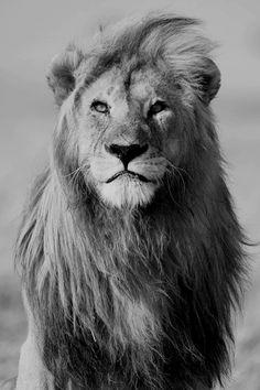 / King \