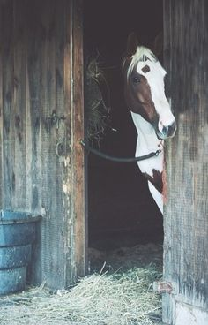 """Elizabeth approached her slowly. It seemed like she owed the horse an apology. """"Hey Max. I just wanted to say thank you. For today. I know we haven't always gotten along, but riding with Toby this morning was wonderful. So thank you."""" Slowly Max breathed and stepped forward slowly to nudge Elizabeth's hand with her nose. - Pulling Leather"""