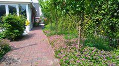 Pad naar voortuin en straat met hergebruikte nieuw gebakken klinkertjes. Border met bodembedekkende vaste planten, kruiden en vruchtbomen. Tuinontwerp: De Tuinregisseurs Sidewalk, Pad, Side Walkway, Walkway, Walkways, Pavement