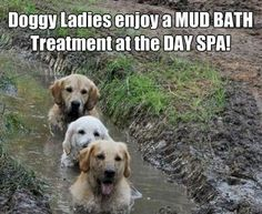 A real mud pack...