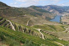 Vinhos de Portugal: DOURO
