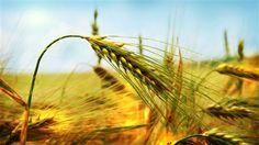 Tarımda müjde Kırsal Kalkınma Destekleri Kapsamında Tarıma Dayalı Yatırımların Desteklenmesine İlişkin Bakanlar Kurulu kararı Resmi Gazete'de yayımlanarak yürürlüğe girdi. Buna göre, tarıma dayalı ekonomik yatırımlar ile bireysel sulama sistemlerinde hibeye esas proje tutarı üst limitinin yüzde 50'sine hibe yoluyla destek verilecek