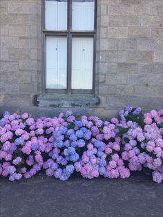 Historical exploring #curiouserandcurioser #flowers #castle Vintage Boutique, Exploring, Beautiful Flowers, Alice, Castle, Vintage Fashion, Castles, Fashion Vintage, Explore