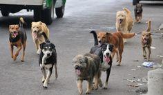 Tribu Fénix y COBAE de Zongolica alzan censo para ver población de perros callejeros. - http://www.esnoticiaveracruz.com/tribu-fenix-y-cobae-de-zongolica-alzan-censo-para-ver-poblacion-de-perros-callejeros/
