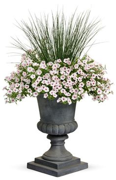 Proven Winners - Silk & Satin combination container recipe containing Supertunia® Vista Silverberry - Petunia hybrid, Graceful Grasses® Blue Mohawk® - Sof. Container Flowers, Container Plants, Container Gardening, Front Door Planters, Urn Planters, Porch Planter, Front Porch, Garden Urns, Lawn And Garden