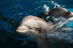 New Device May Open Up Communication With Dolphins, But Will They Respond?