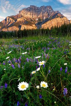 Cascade Mountain Sunrise, Banff National Park, Canada