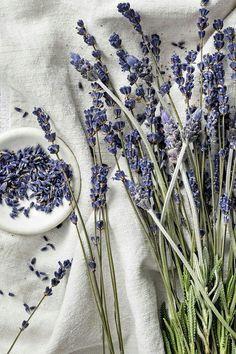 Lavender Aesthetic, Nature Aesthetic, Flower Aesthetic, Purple Aesthetic, Dried Lavender Flowers, Lavender Garden, Lavender Fields, Lavender Sleep, Roses Garden