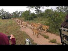 Sabi Sabi Private Game Reserve, South Africa - Southern pride
