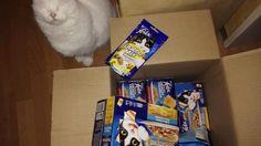 [Verlosung] Tolle Futterpakete von Felix | Tarisa testet