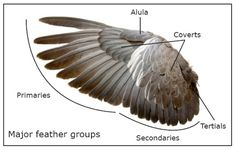 Flight Part 3: Wing Structure