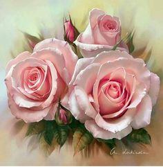 Roses.. Beautiful