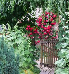 Love the flowers. I want some hollyhocks!