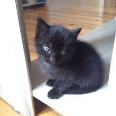 Kitty 5 semaines