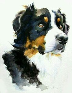 Most up-to-date Screen bernese mountain dogs painting Tips Over several years, this Bernese Hill Pet is really a cornerstone connected with plantation daily life in Switzer Easy Watercolor, Watercolor Animals, Watercolor Paintings, Watercolours, Painting Fur, Painting Tips, Animal Paintings, Animal Drawings, Art Drawings