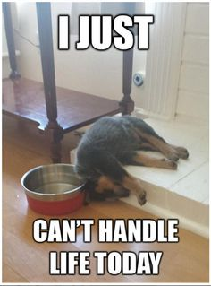 Can't handle life - Funny Animal Pictures Of The Day - 28 Pics