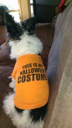 Sarah says Happy Halloween