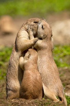 Animals And Pets, Baby Animals, Funny Animals, Cute Animals, Wild Animals, Animal Memes, Animals Kissing, Cute Creatures, Beautiful Creatures