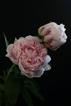 Sylvia's Simple Life: The Last Peonies