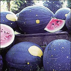 Grow Moon and Stars heirloom watermelons!