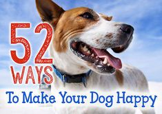 52 Ways to Make Your Dog Happy - great list!
