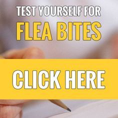 Stop Flea Bites from Itching - Quick Fix to Relieve Itchy Skin