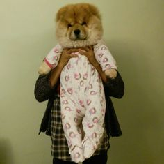 And this is the ideal baby. | Community Post: 14 Adorable Photos That Prove You Need To Follow Pumba The Chow Chow On Instagram