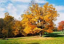 fall season - - Yahoo Image Search Results
