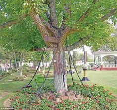 Please release tree, let tree go:The banyan tree is still tied down by…
